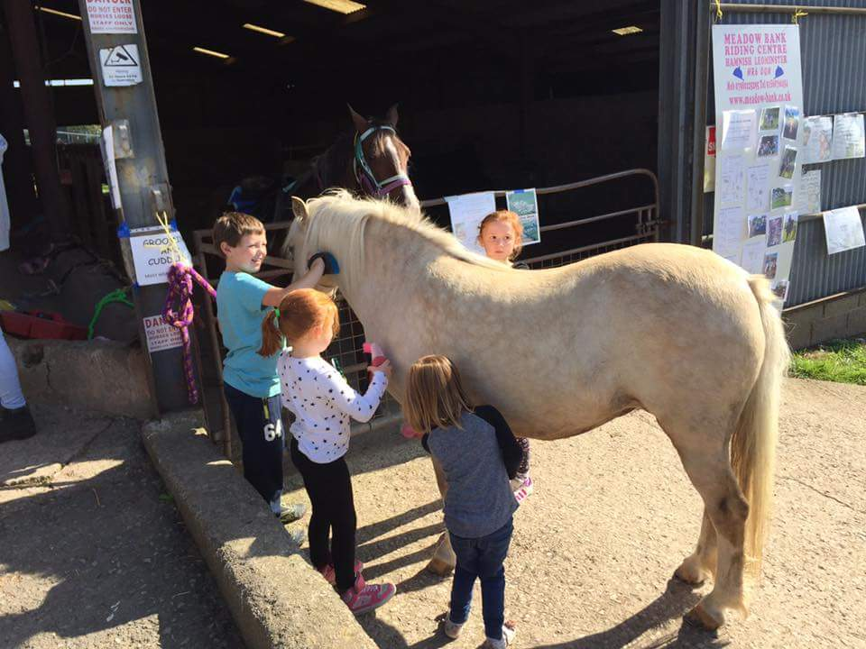 A group grooming Honey the palomino at Meadow Bank (Pic: BEF)