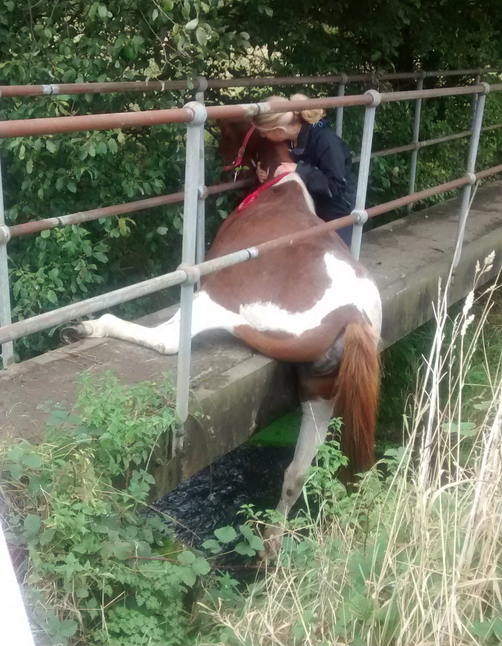 It's thought that the mare was walking across the footbridge when she slipped (Pic: RSPCA)