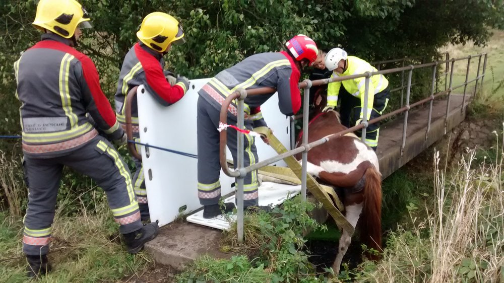 The fire service, a vet and the RSPCA were all part of the rescue mission (Pic: RSPCA)