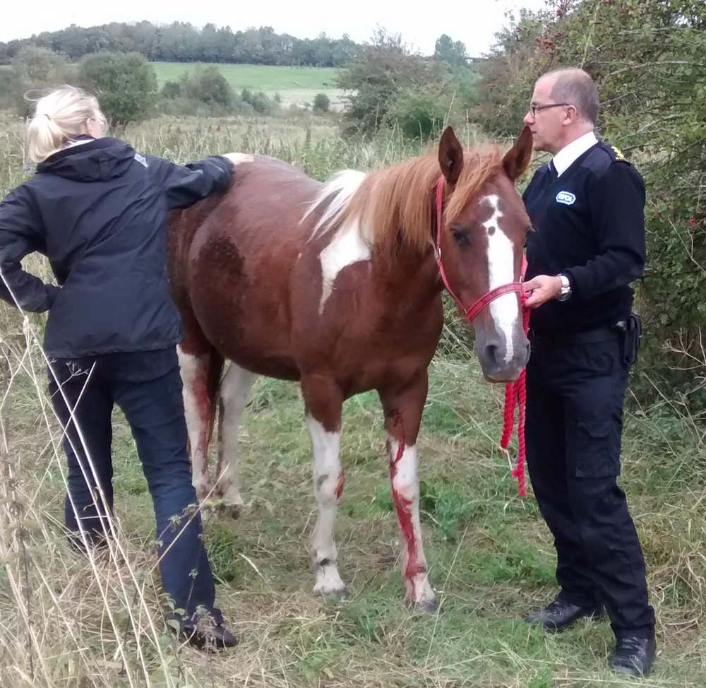 Despite having bloody legs, the mare thankfully wasn't seriously injured (Pic: RSPCA)