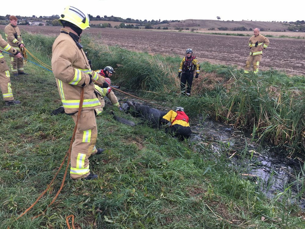 The young colts were submerged up to their heads in the bog (Pic: RSPCA)