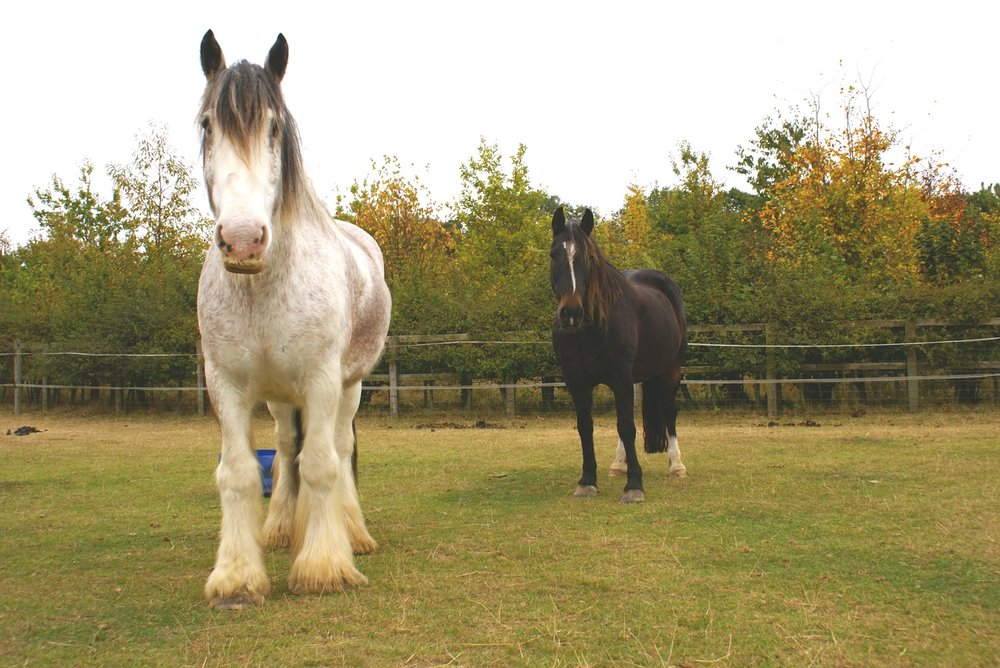 Boo (left) stayed by Oliver's side as he was put down (Pic: Redwings)