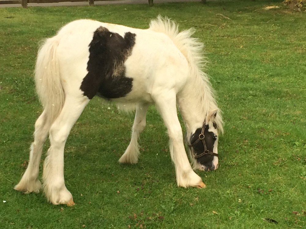 Olympus was found abandoned in a field with two other very young foals