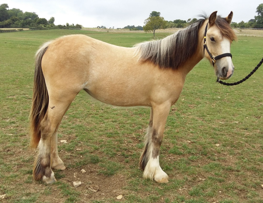 Pandora has since made a full recovery and is looking for a new home (Pic: World Horse Welfare)