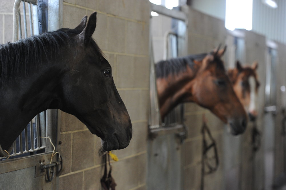 Whether you own a horse or run an equine business such as a livery yard, this talk could be useful