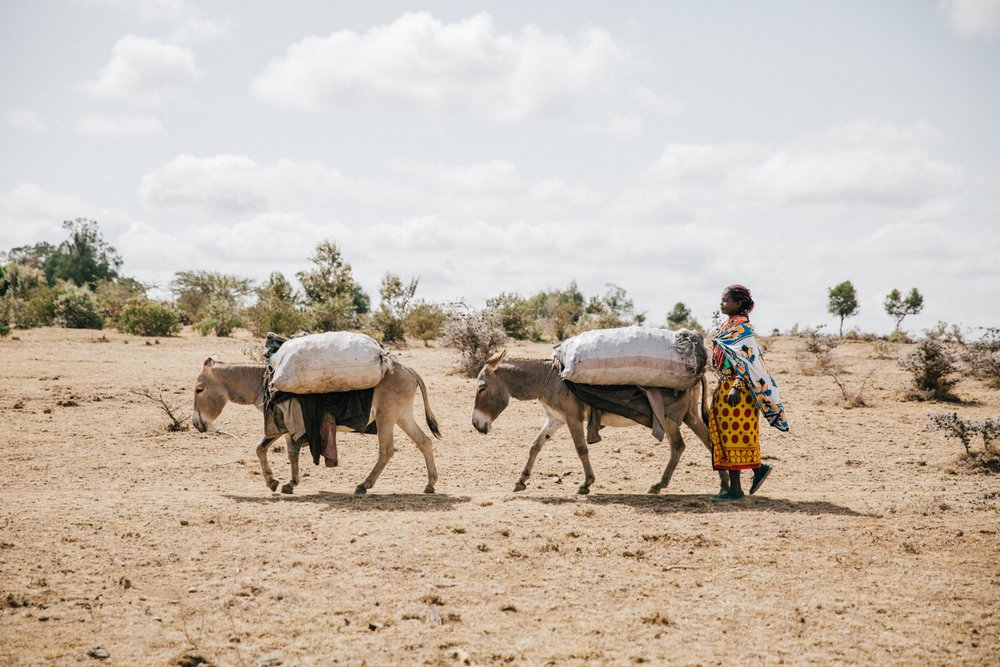 Horses, donkeys and mules all help with food security (Pic: The Brooke)