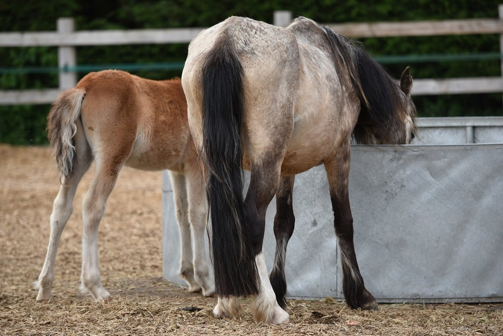 The horses were in poor condition when they were rescued (Pic: Redwings)