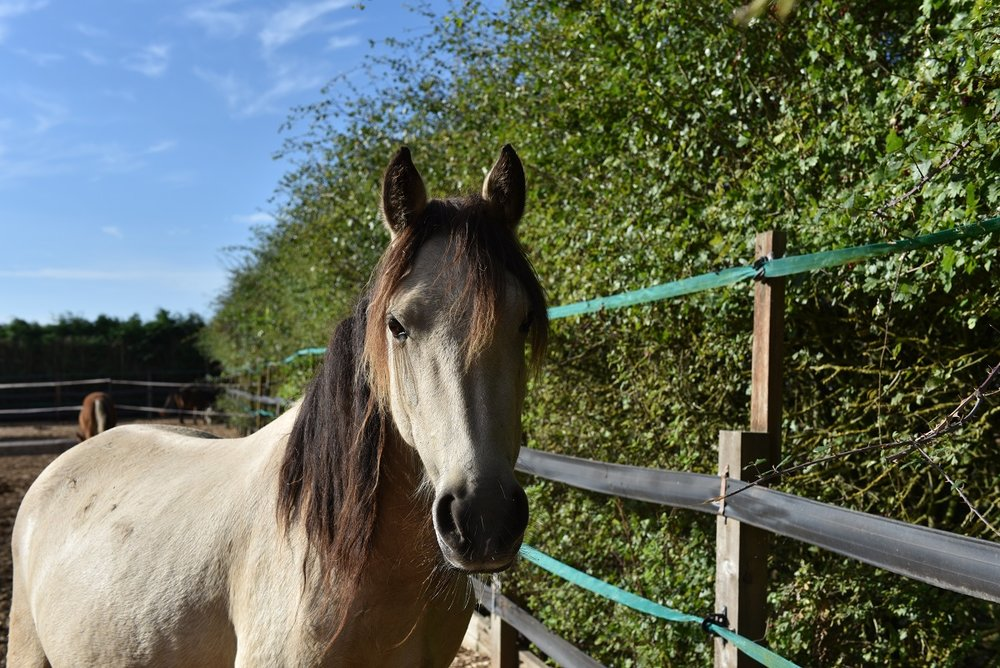 A few months later, the ponies are making full recoveries at Redwings (Pic: Redwings)