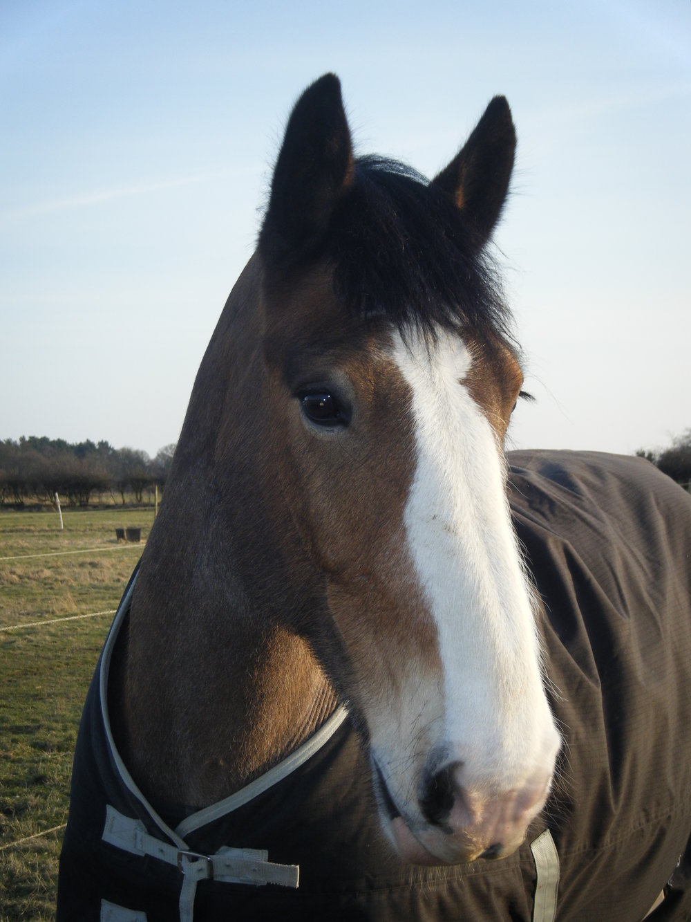 Hovis the gentle giant tells us why you should visit Your Horse Live