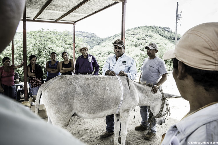 The Brooke's work in these areas helps to educate rural communities (Pic: Enrique Urdaneta)