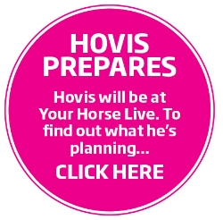 hovis the horse.jpg