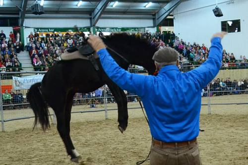 Meet Monty at the Equine Learning Zone and see him perform on Saturday night!
