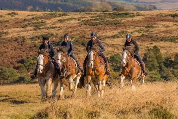 In readiness for the race, the horses have been in training on Dartmoor