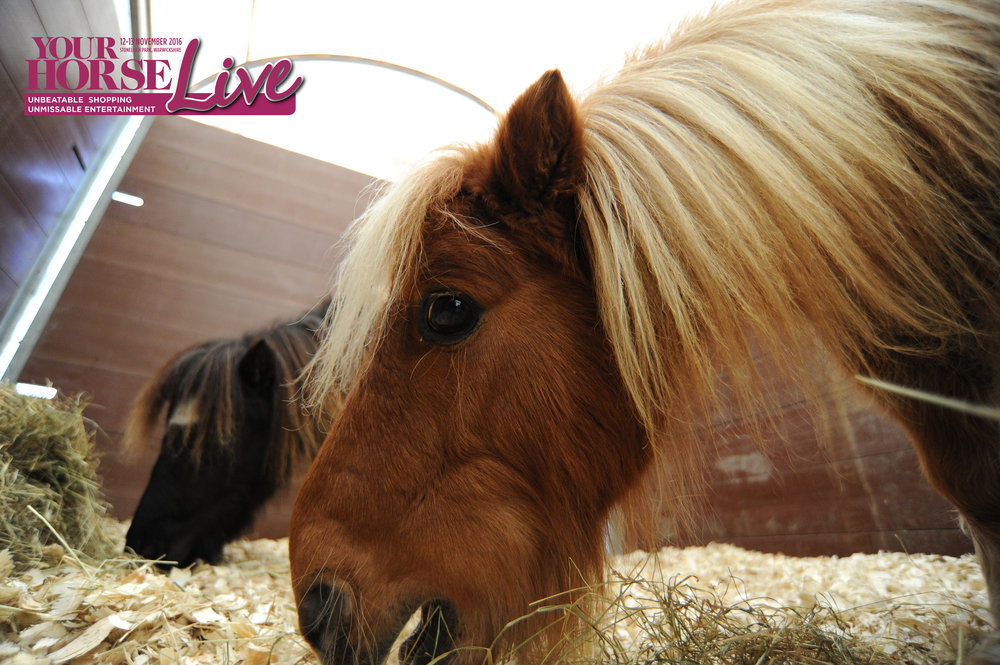 Edam in the your hrose live rescue village.jpg