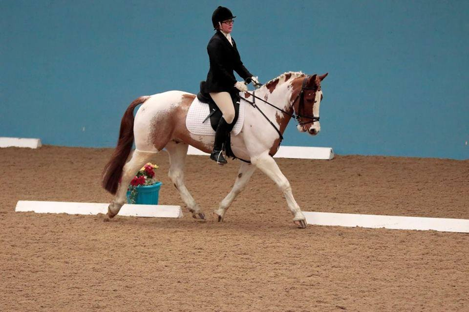 Albie shows off his winning dressage skills with no further sarcoids to be seen