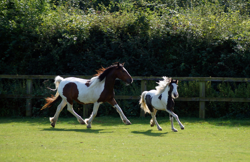 Redwings and World Horse Welfare have given the horses a new life (Pic: Redwings Horse Sanctuary)