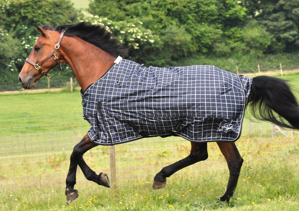 A Lightweight Rug, Like This One Are A Good Choice For Simply Keeping Your  Horse