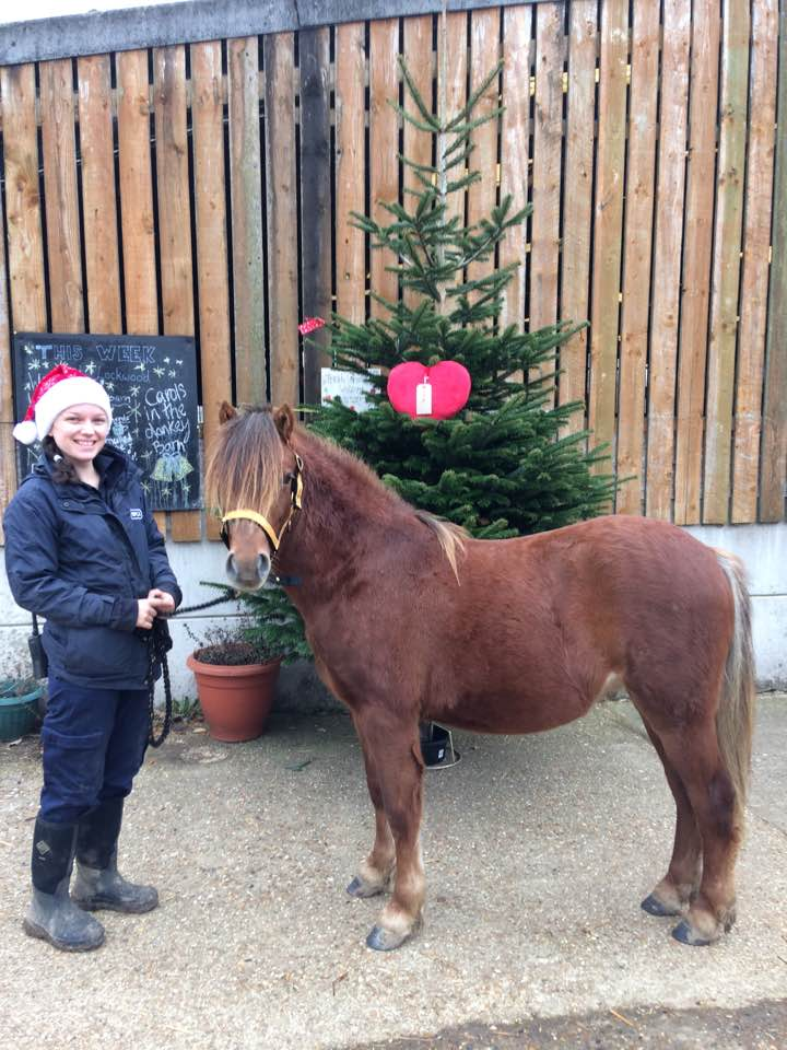 Robin is expected to reach 13hh when fully grown (Pic: RSPCA)