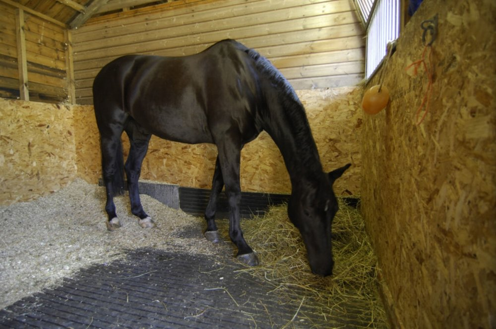 Feeding off the floor can be beneficial to your horse