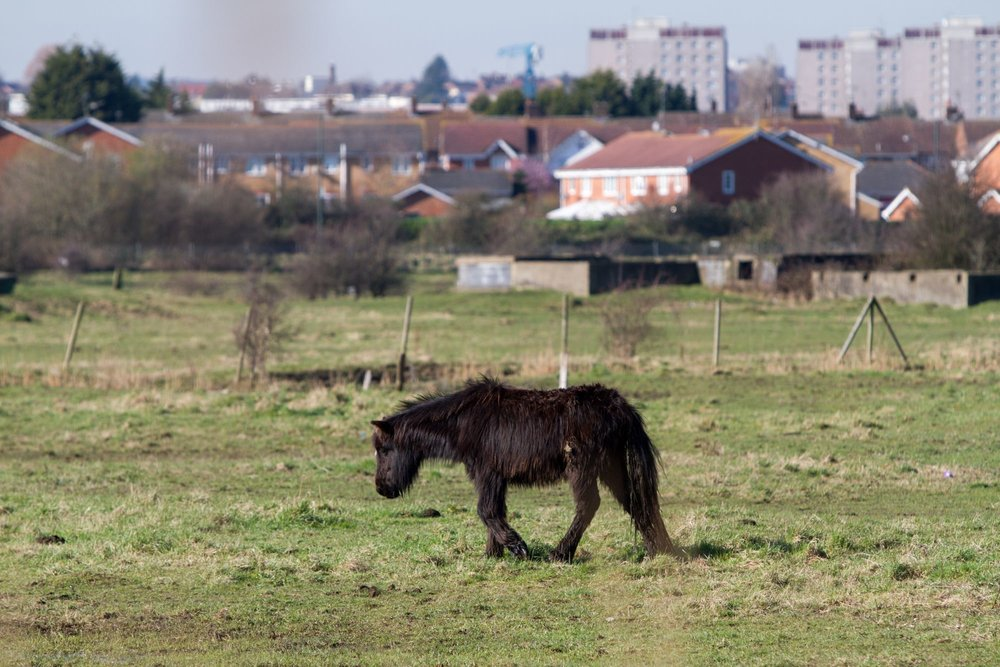 Fly grazing is a widespread problem in the UK (Pic: World Horse Welfare)