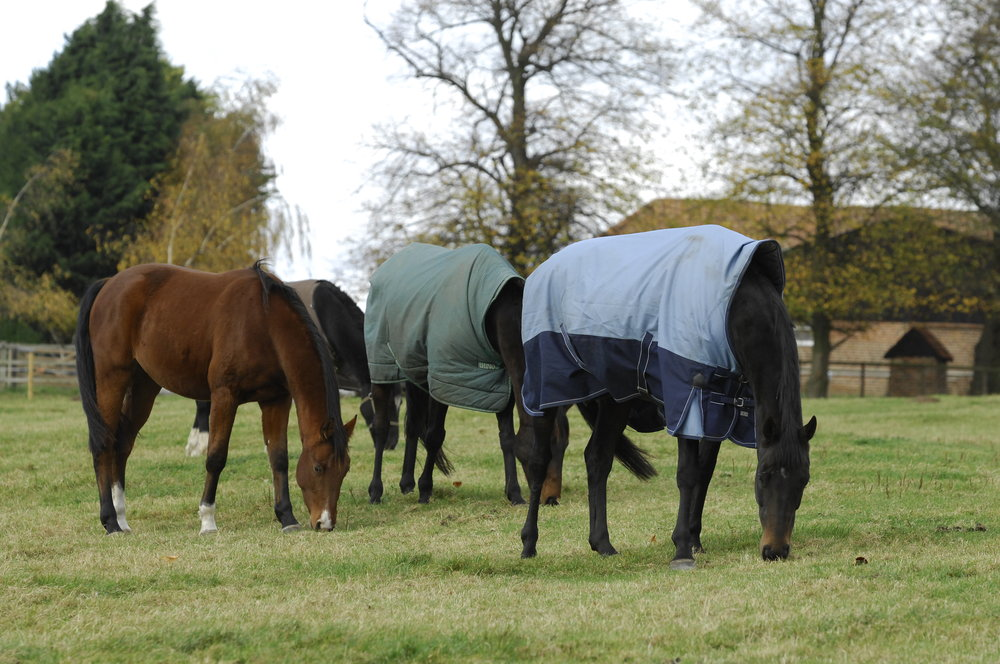 The nutritional value of grass is lower in the winer so horses will need additional forage