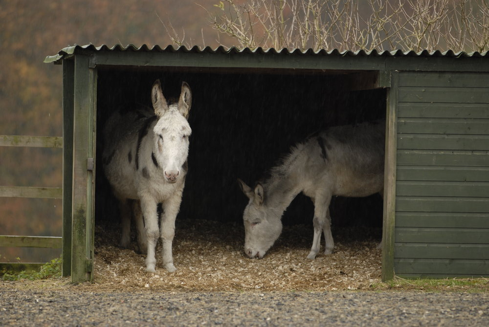 donkeys in a shelter