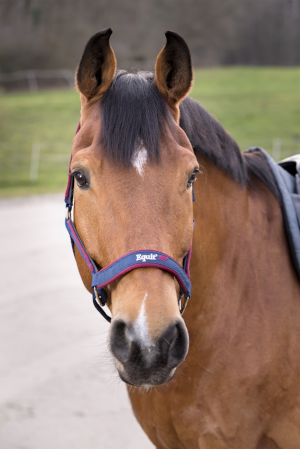 EQUIT'M head collar