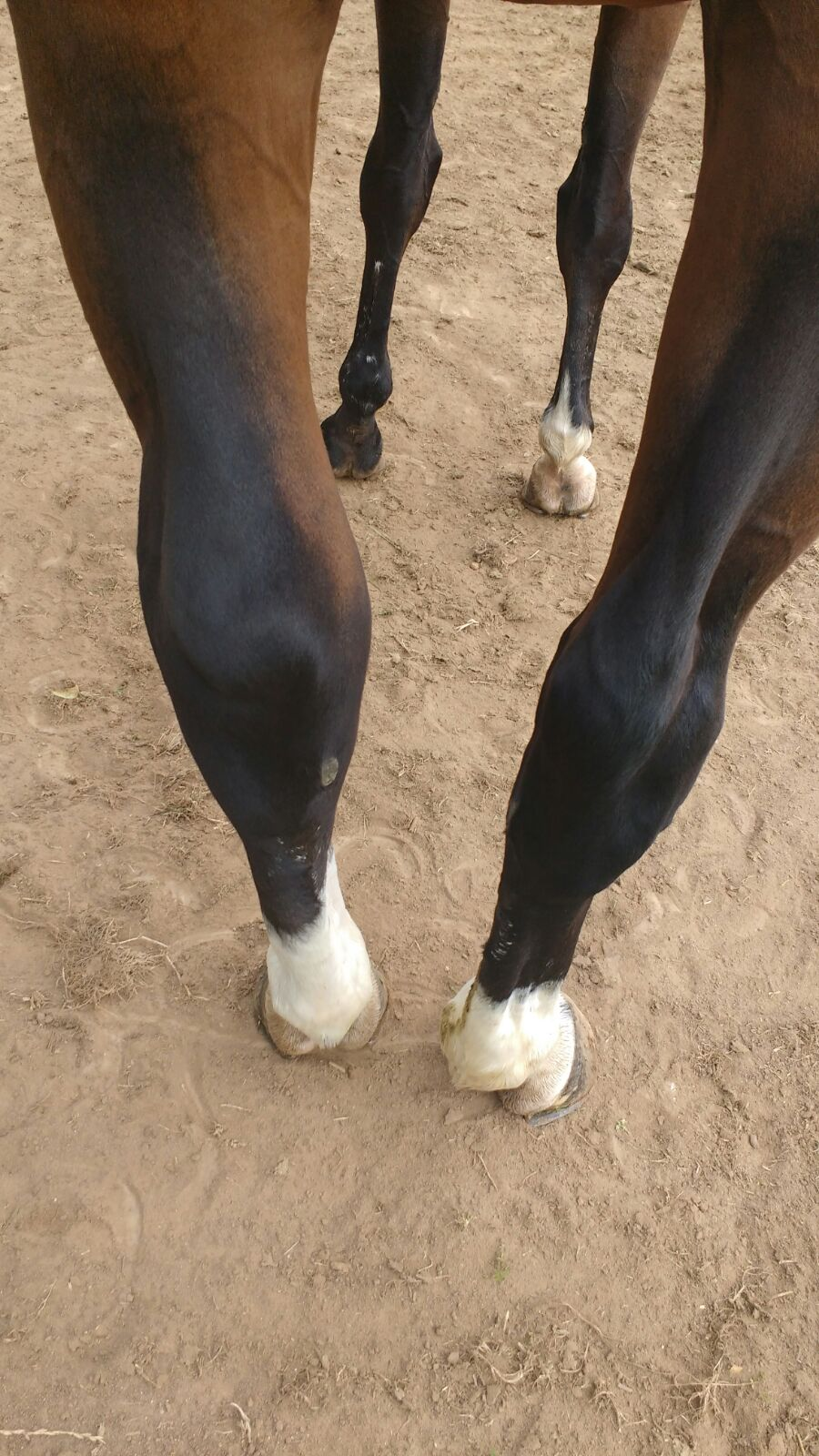 Treating a swollen hock can be a long process (Pic: Nancy Homewood)