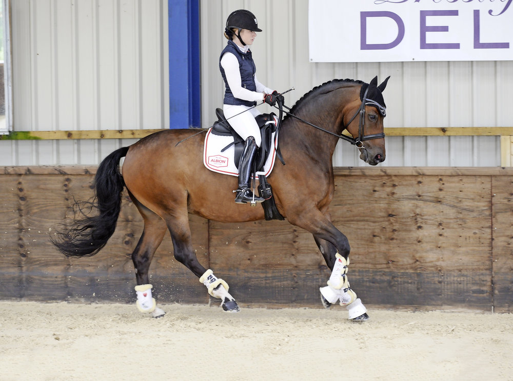 Close your thighs and tighten your tummy to ask your horse to collect his canter