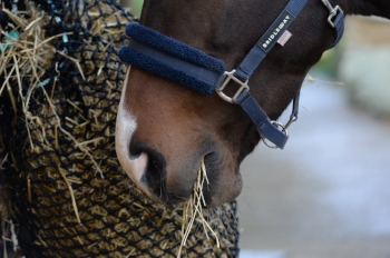The robust Trickle Net controls how quickly your horse can eat his hay