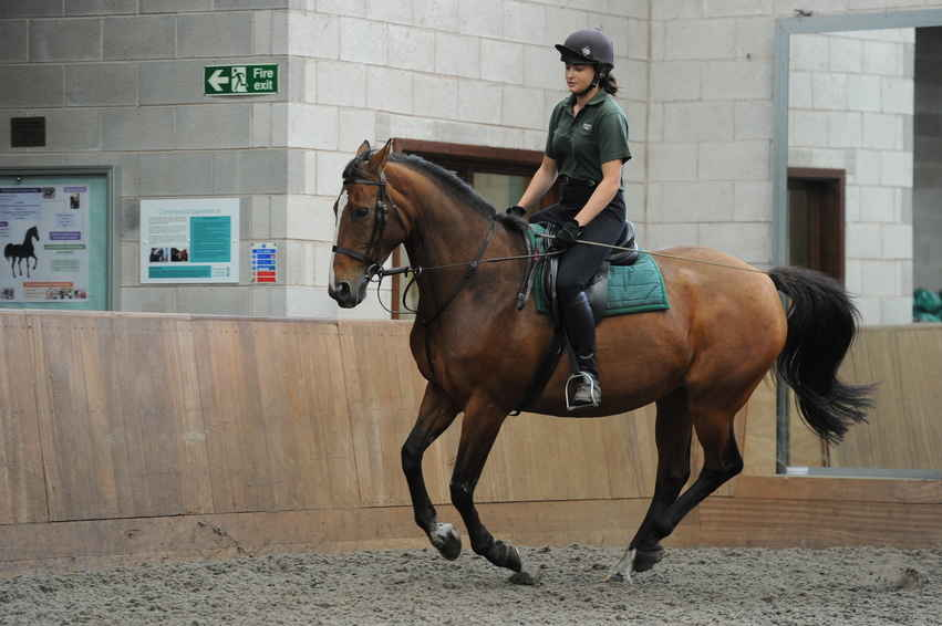If your horse seems uncomfortable, it could be his saddle