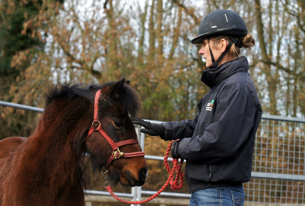 Sarah Hallsworth and Pippin, Equine Behaviour Manager at Redwings, is delighted the charity has been named as APBD's Charity of the year