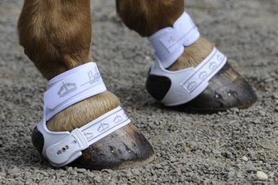 Veredus Piaffe Shield boots
