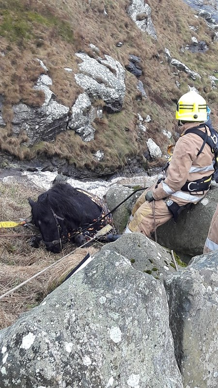 Tara had fallen 20-30ft down the side of a cliff (Pic: Scottish Fire and Rescue Service)