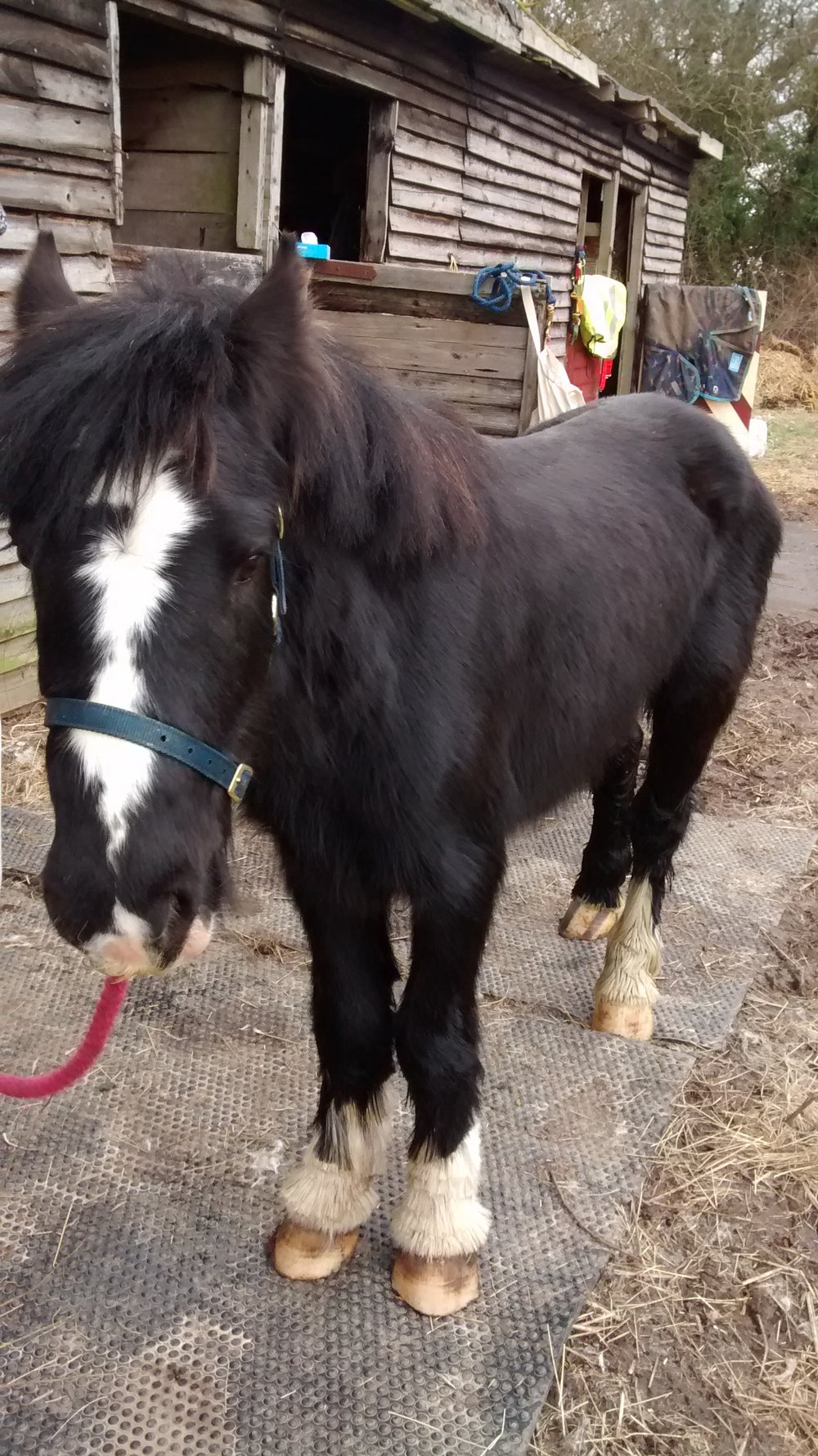 The poorly foal, now named Blackjack, isrecovering at the RSPCA's equine centre in Shropshire