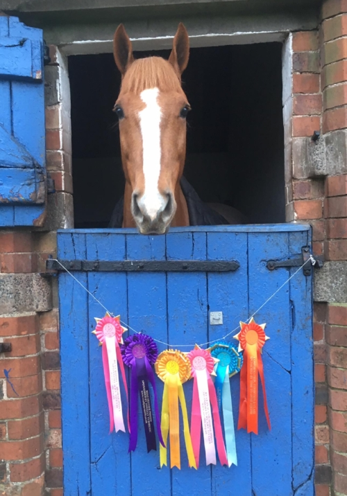 Win classes and add to your rosette collection!