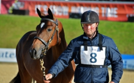 Show jumping stars of the future will be bought at the elite auction