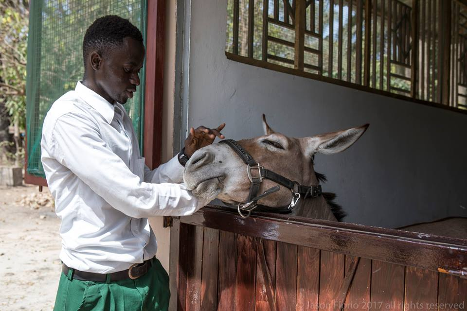 Students learn how to take care of donkeys and horses