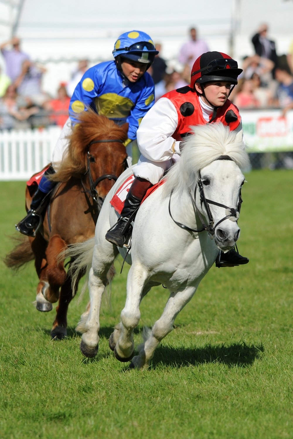 7 Shetland Pony Grand National.JPG