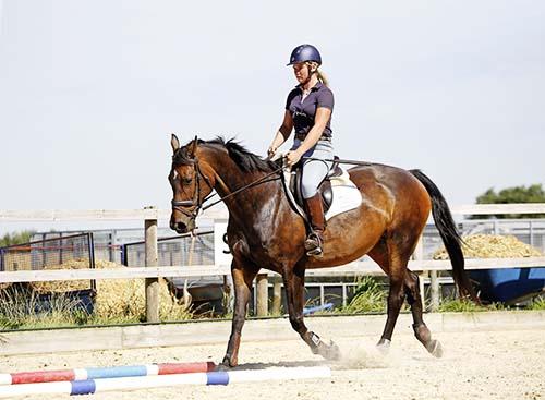 trotting horse thorugh poles