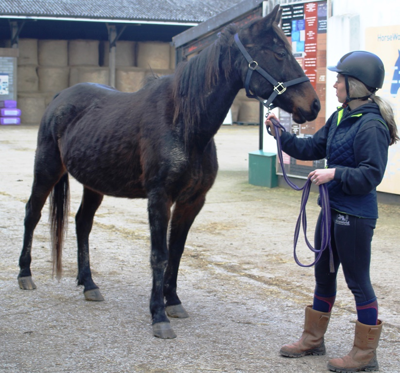 Sapphire on her arrival at HorseWorld