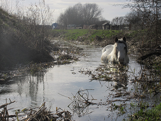 The mare had become trapped in the icy water (Pic: World Horse Welfare)