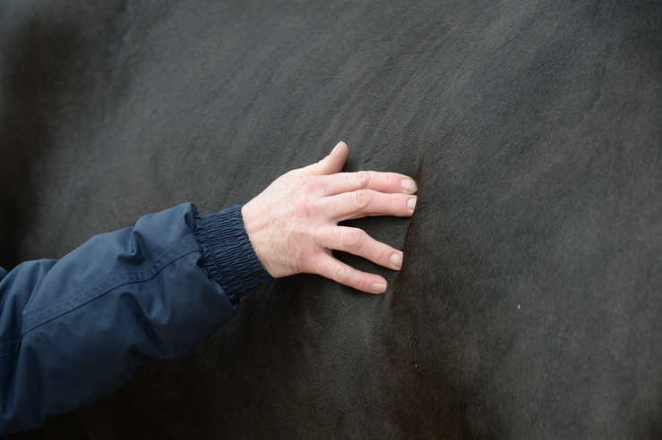 Regularly body condition scoring your horse helps