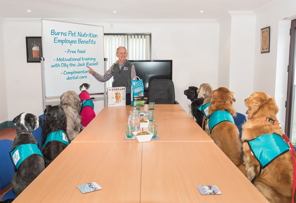 John Burns of Pet Nutrition has decided to hires man's best friend