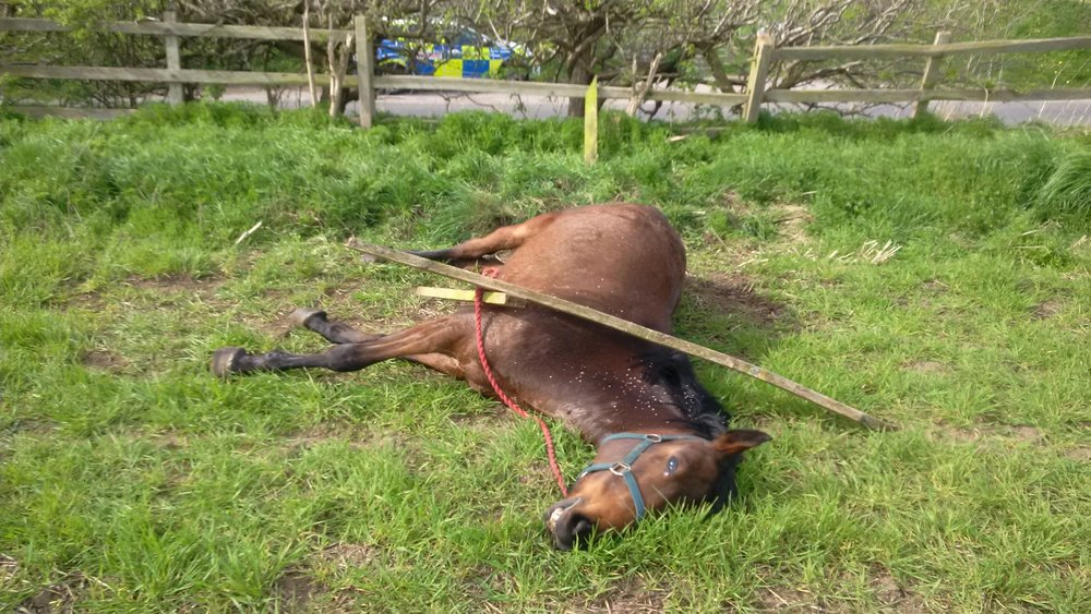 The mare had already died when she was found (Pic: RSPCA)