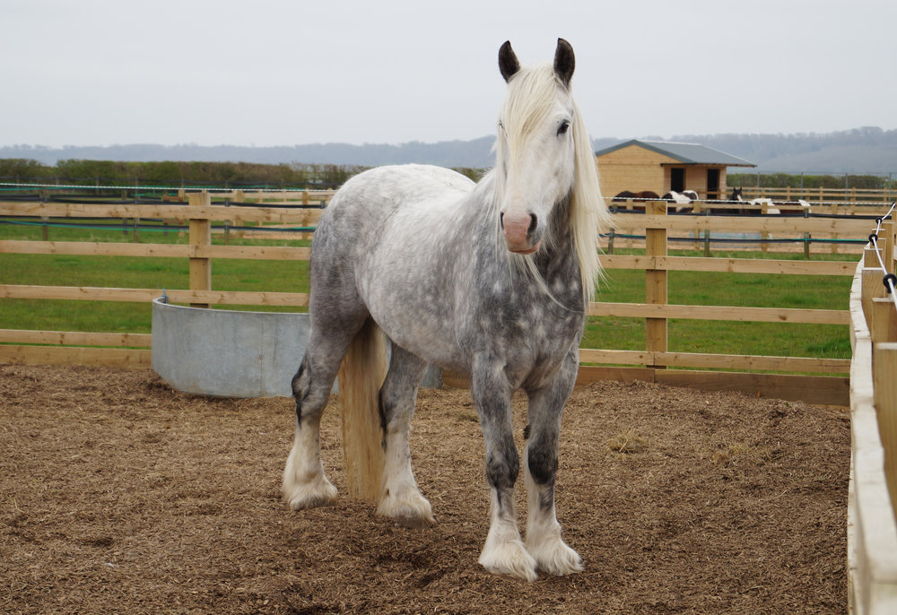 Gorgeous Major is turning nine this year (Pic: Redwings)