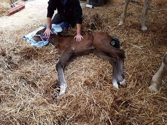 It was a worrying start for this little foal