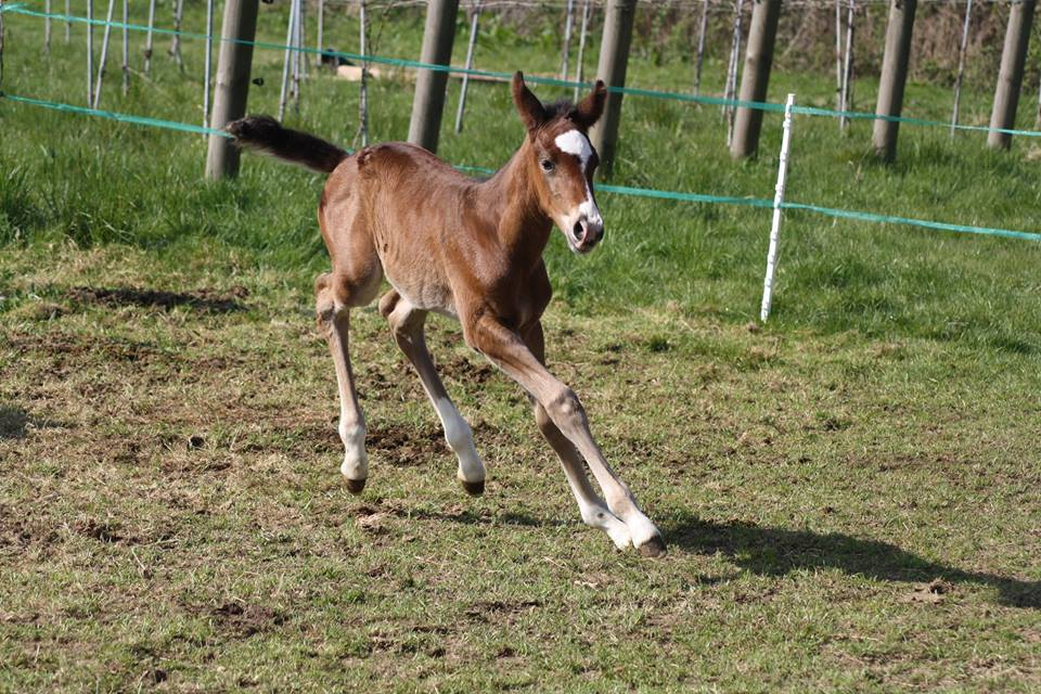 Now well, the foal is happy and full of beans!