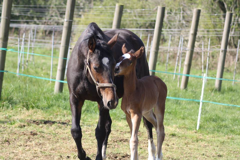 A happy mum with her healthy foal!