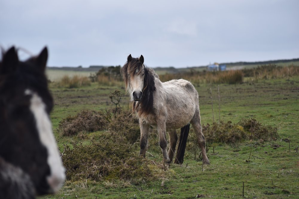 Brina before the Gelligaer rescue April 2016 (Pic: Redwings)